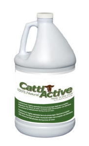cattle active
